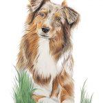 portret zwierzęcia ze zdjęcia